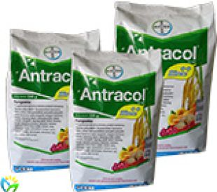 Fungsicides Antracol 70 WP 1 01_home_recovered